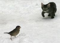 кошка и воробей .